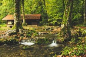 森の中のキャンプ場と小屋